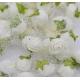Stemless Foam Rose-heads - Cream (50pcs)