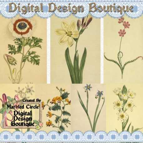 Download - Wildflower Vintage Images 1