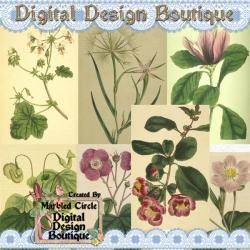 Download - Wildflower Vintage Images 3