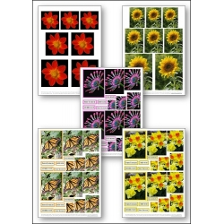 Download - Set - Flower Photos
