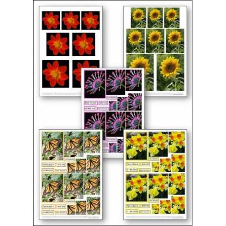 Download - Set - Flower Photos