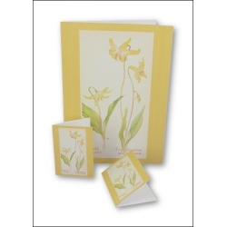 Download - Set - Wild Flowers Notecards 1
