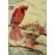 PDIL DVD - American Birds
