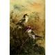 Public Domain Image DVD - American Birds