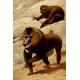 DVD - Wild Animals
