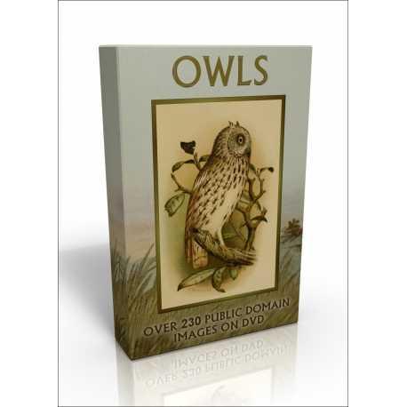 Public Domain Image DVD - Owls