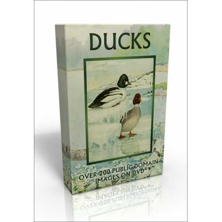 Public Domain Image DVD - Ducks