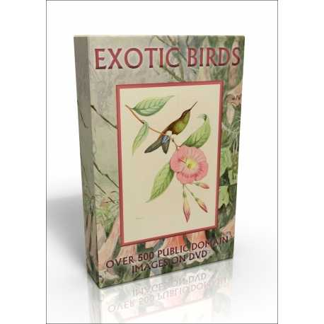 Public Domain Image DVD - Exotic Birds