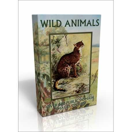 Public Domain Image DVD - Wild Animals