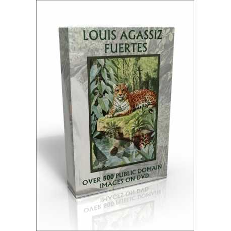 Public Domain Image DVD - The Wildlife of Louis Agassiz Fuertes