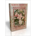 Public Domain Image DVD - North American Wild Flowers
