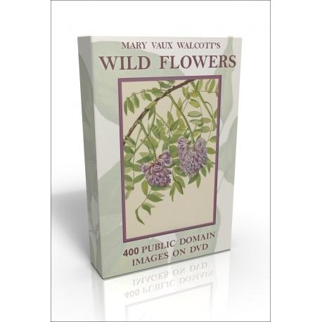 Public Domain Image DVD - Mary Vaux Walcott's American Wild