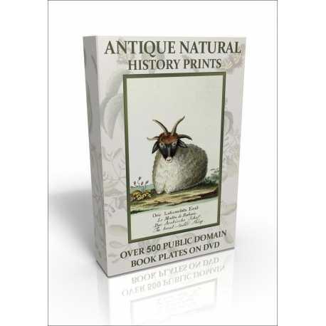 Public Domain Image DVD - Antique Natural History Prints