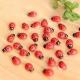 Miniature Ladybirds (20pcs)