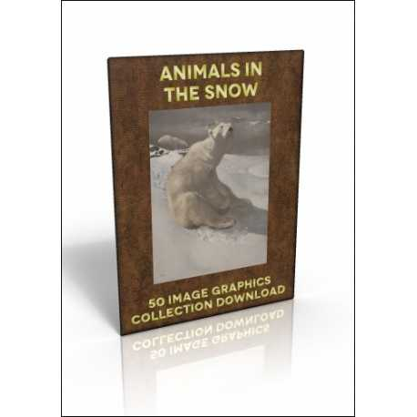 Download - 50 Image Graphics Collection - Animals in the Snow