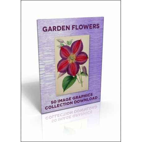 Download - 50 Image Graphics Collection - Garden Flowers