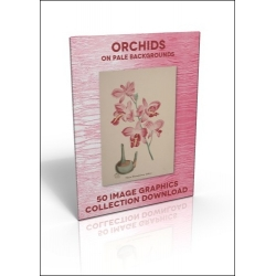 Download - 50 Image Graphics Collection - Orchids (on pale
