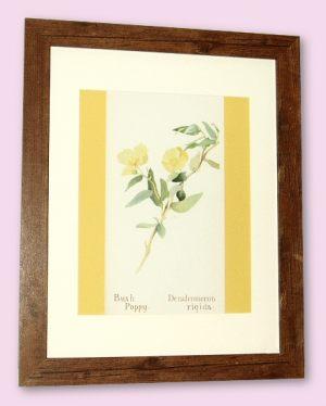 Bush Poppy - A4 Print