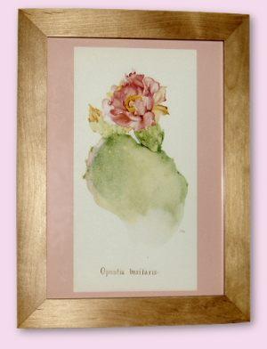 Opuntia Basilaris - A4 Print