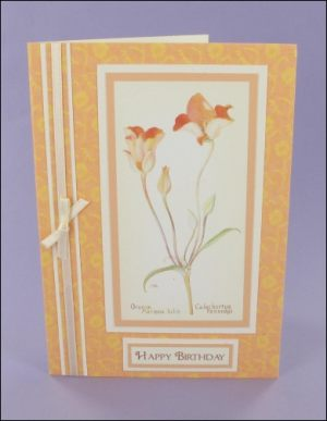 Orange Mariposa Tulip Birthday card