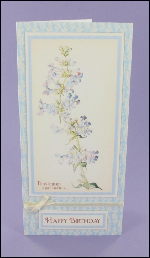 Penstemon Blue Birthday card