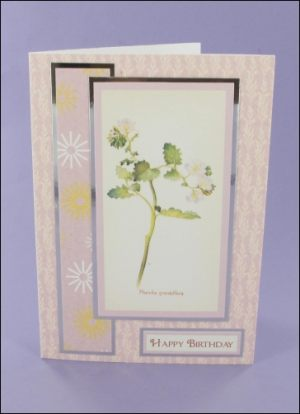 Phacelia Grandiflora Birthday card
