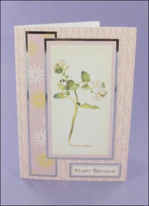 Phacelia Grandiflora Birthday card