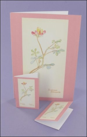 Bi-Coloured Lupine Notecard & Tags