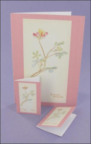 Bi-Coloured Lupine Notecard & Tags