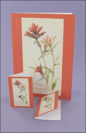 Indian Paint Brush Notecard & Tags