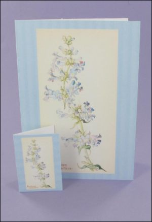 Penstemon Notecard & Tags