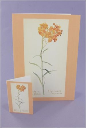 Western Wallflower Notecard & Tags