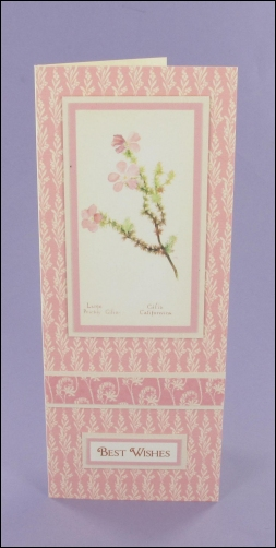 Large Prickly Gilia Small Tall Card