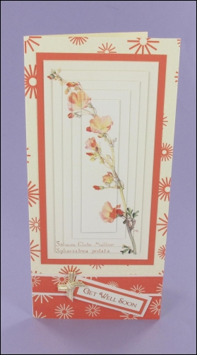 Salmon Globe Mallow Get Well Soon Card