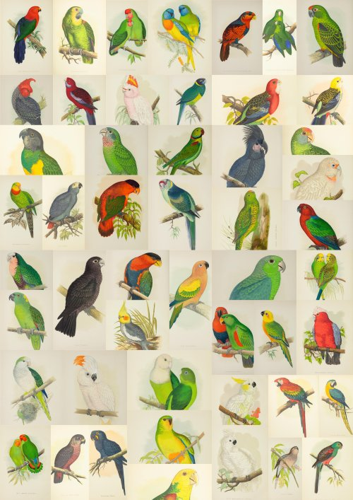 5204055db646cparrots-collage.jpg