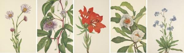 Mary Vaux Walcott's American Wild Flowers