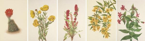 Mary Vaux Walcott's Wild Flowers